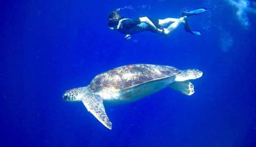snorkelling in zanzibar sea turtle