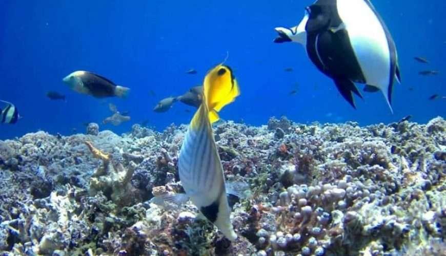 snorkelling and diving in zanzibar islands