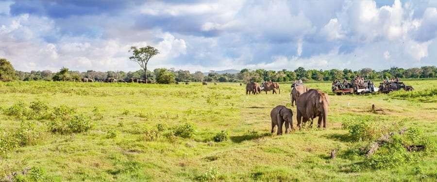 a group of elephants in masai mara national park in kenya