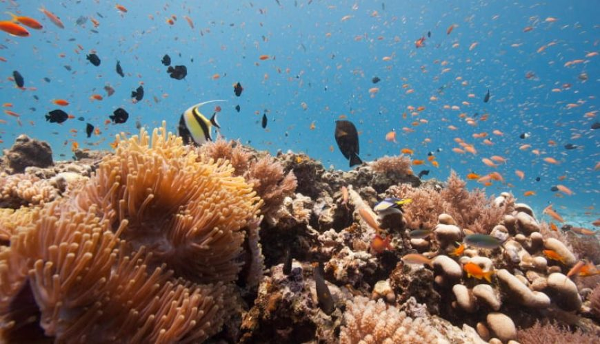 snorkelling in zanzibar islands