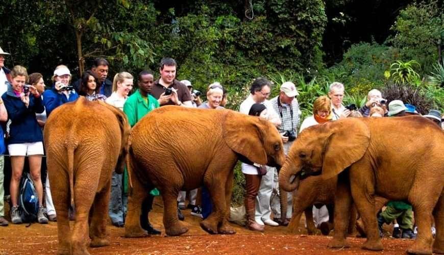 Nairobi Kenya David Sheldrick Wildlifer Trust elephant center