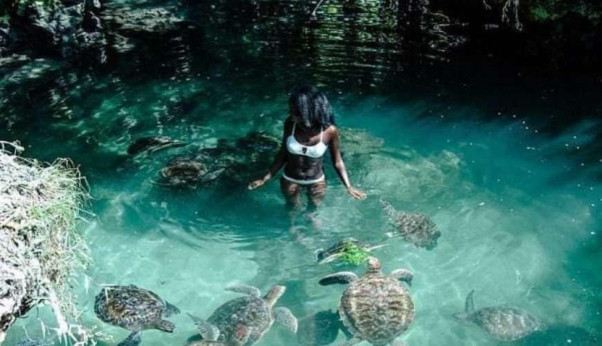 zanzibar turtle aquarium