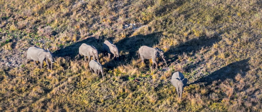 Botswana - elephants in Okawango