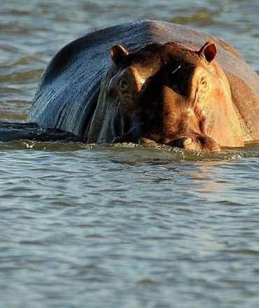 Great Zambesi river zambia highlights (2)
