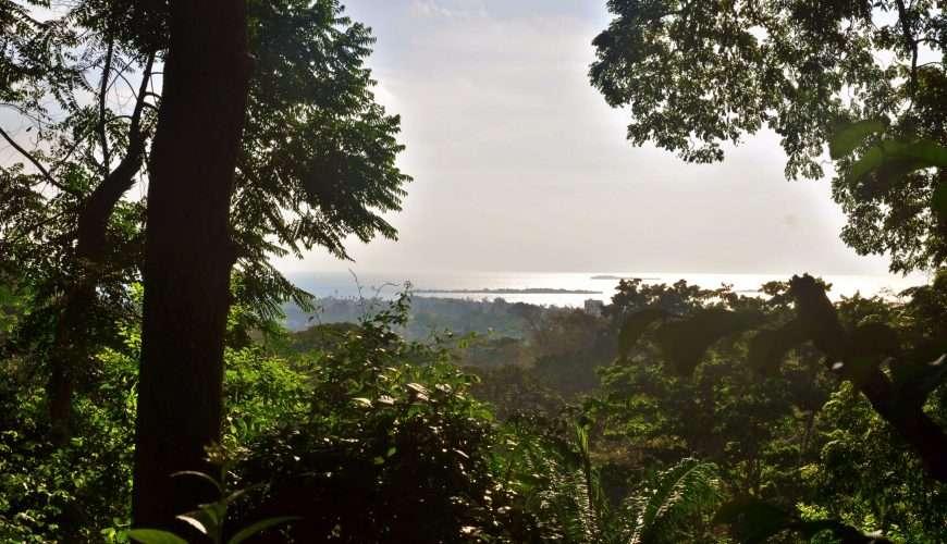 prison island from masingini forest zanzibar island