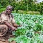 Portrait of African rural farmer in plantation