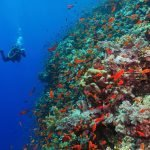 Scuba diver photographer on the underwater coral reef. Underwater photographer diving with corals and red fish. Reef, blue water and diver with camera