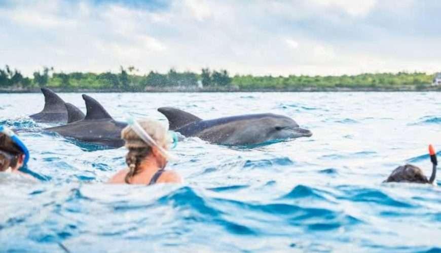 zanpleasure dolphin tour zanzibar (11)
