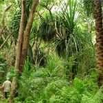 zanpleasure jozani forest zanzibar (1)