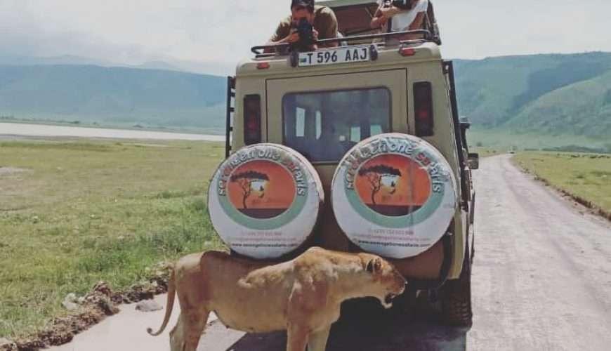 On your safari