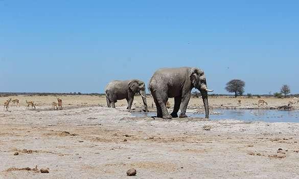 Makgadikgadi and Nxai Pan botswana elephant