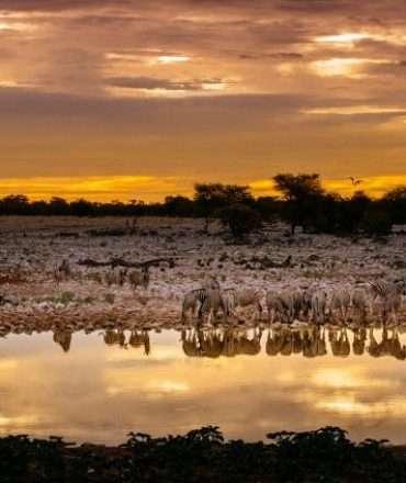 Scenic view of zebras at a waterhole, Etosha National Park, Namibia