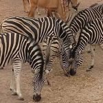 the gambia smiling safaris (16)
