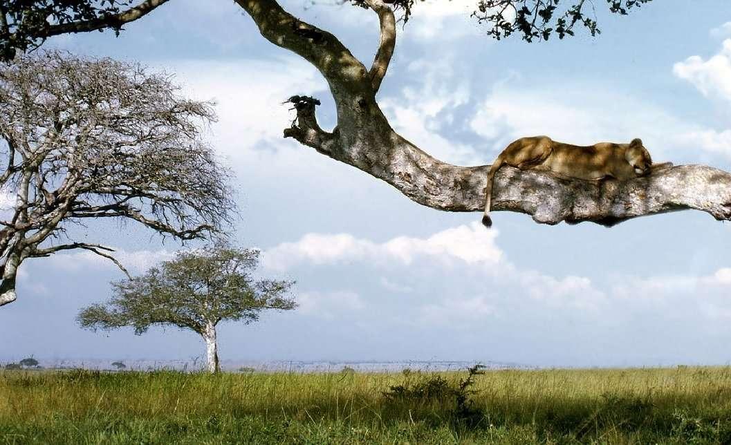 uganda covid 1