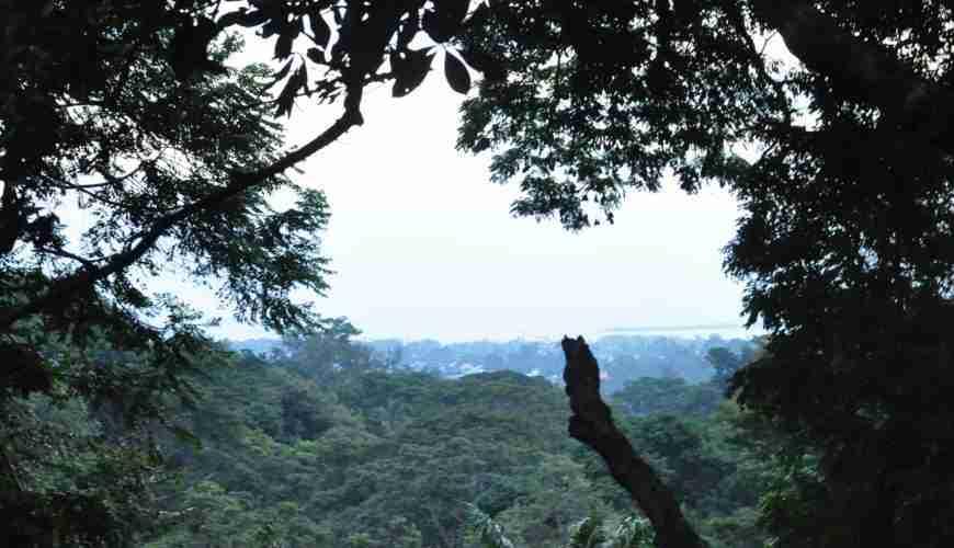 Masingini forest excursion