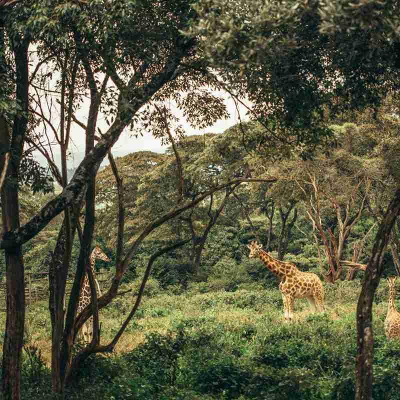 NAIROBI park 1