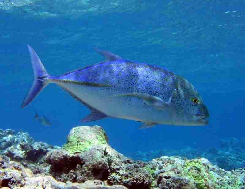 mombasa marine 2