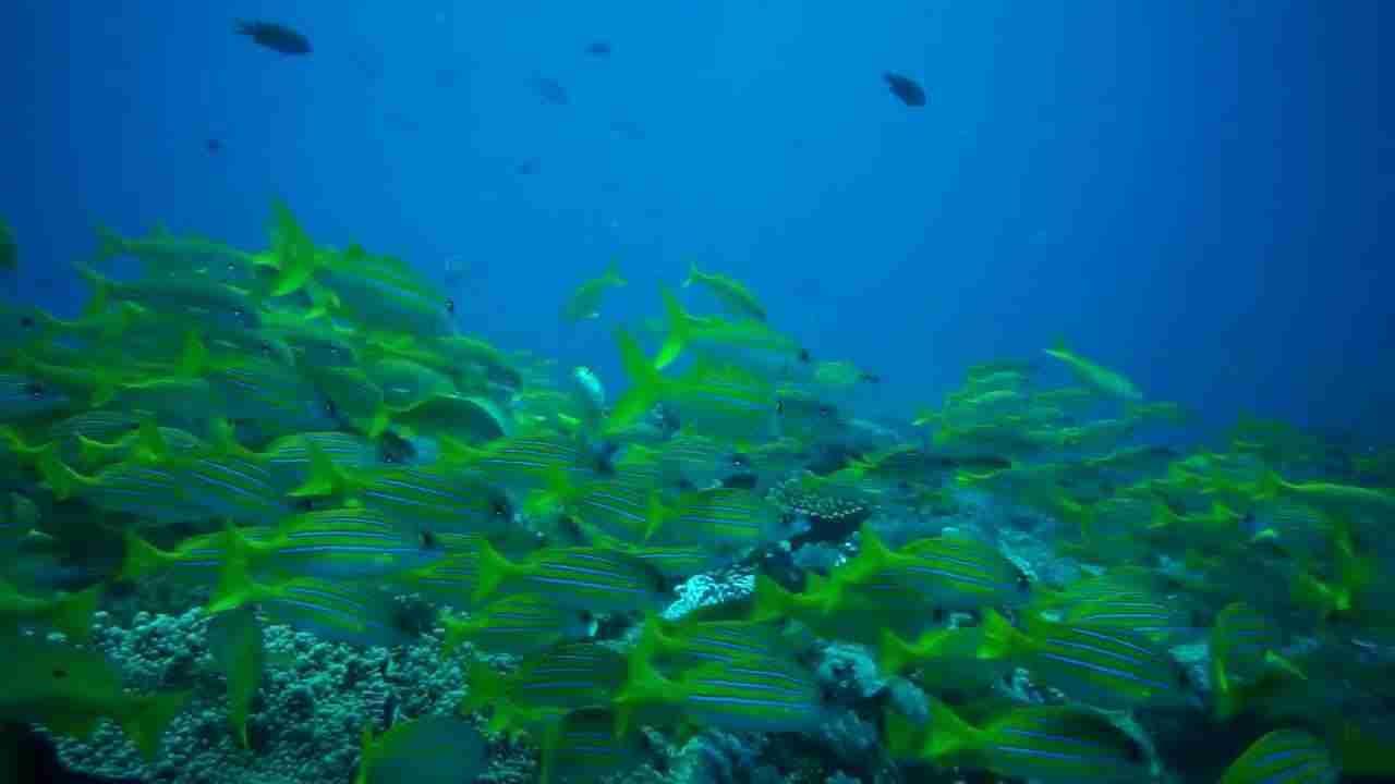 mombasa marine