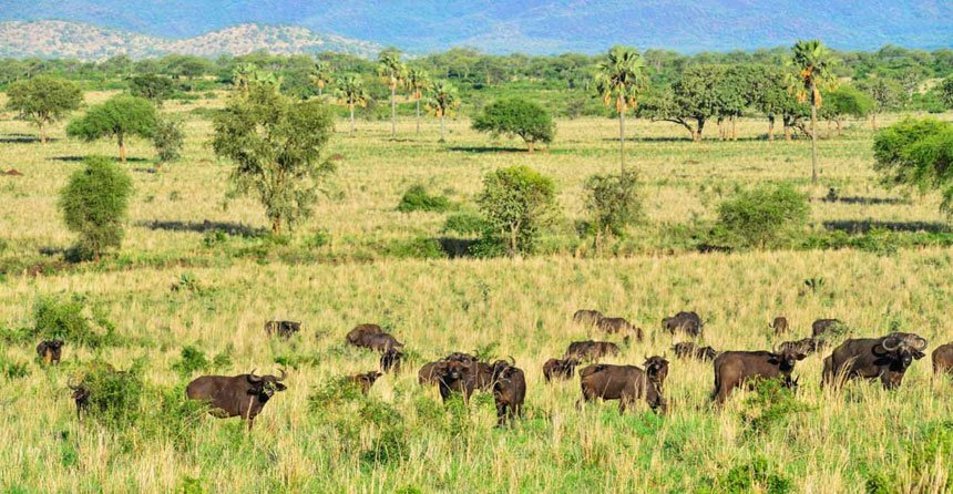 Morning game drive and afternoon Community visit