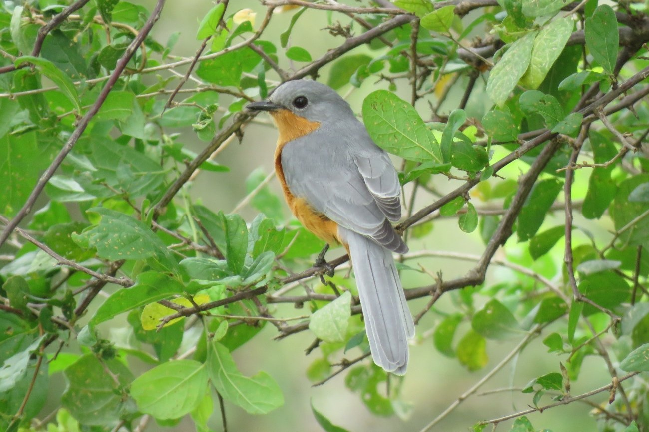 Guided Birding and Cruise to Murchison Falls