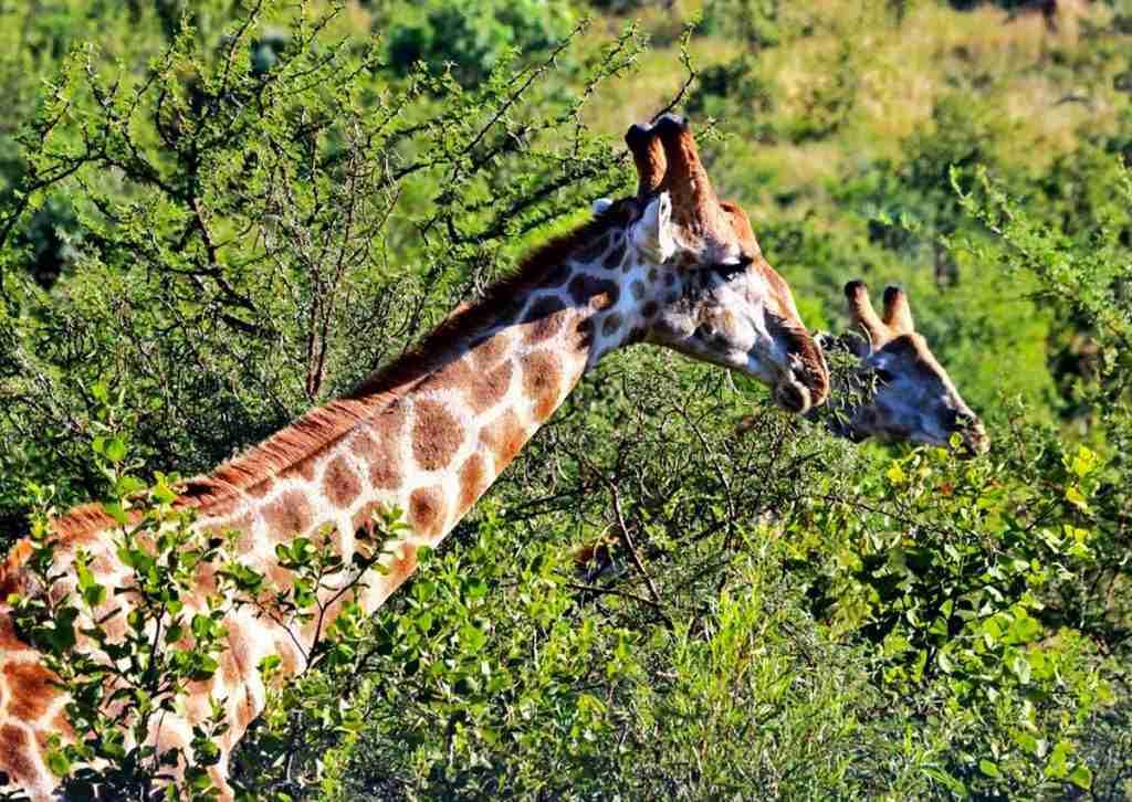 Day-13 - Day-14: Lake Mburo National Park
