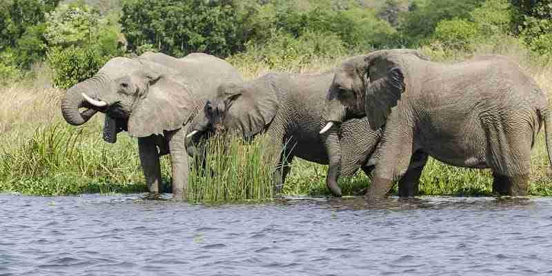Drive to Gulu via Ziwa Rhinos Sanctuary