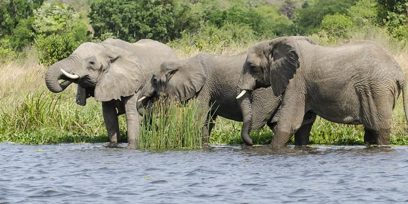 Game drive and Boat ride
