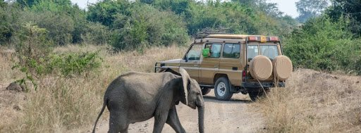 Game drive and afternoon launch cruise at Kazinga channel