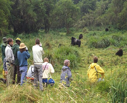 Gorilla Trekking Safaris in Bwindi Impenetrable Forest