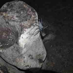 kiwengwa uroa caves - zanzibar (8)