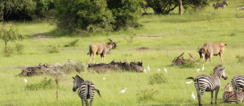 Transfer to Lake Mburo National Park