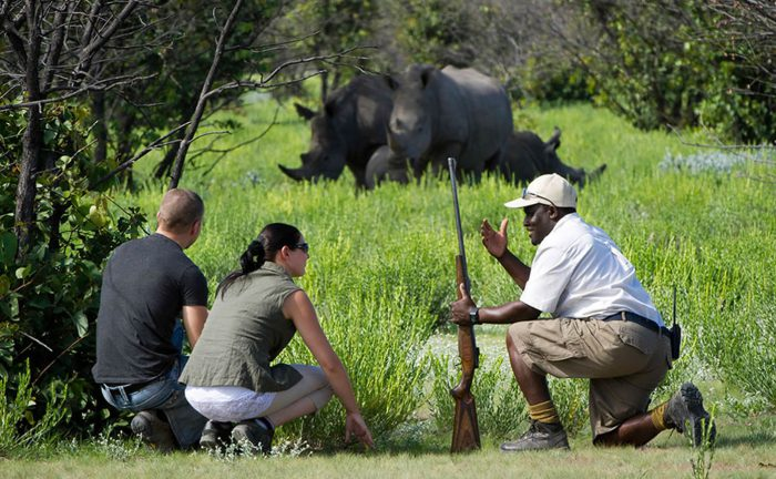 Transfer to Murchison Falls National Park via Ziwa Rhino and top of the falls