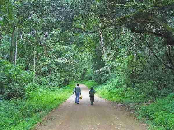 Drive to Kibale National park