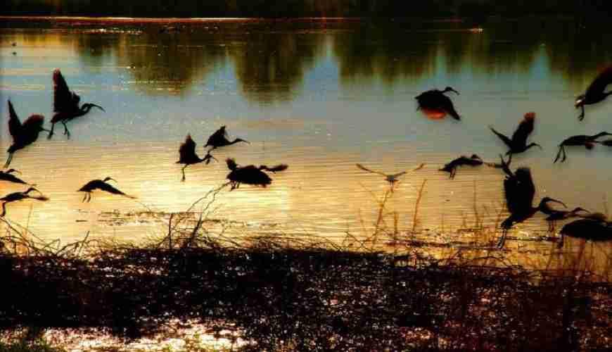 rwanda birds evid