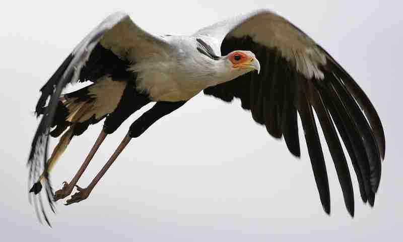 BOTSWANA bird 01