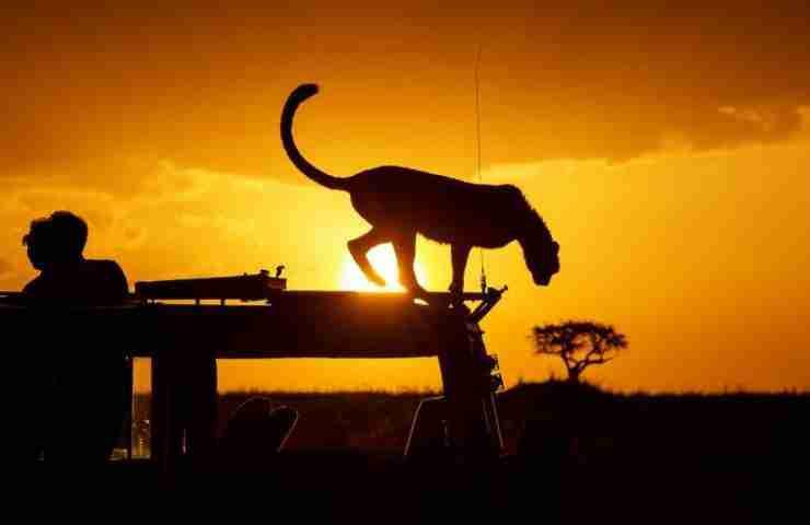 safari after covid