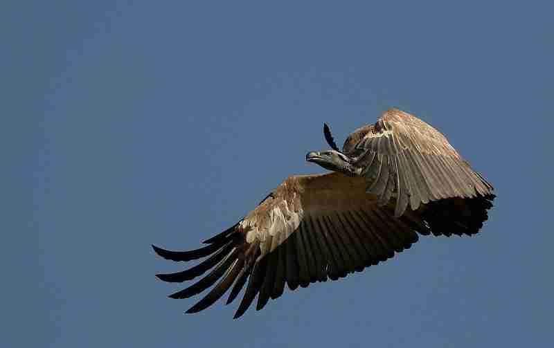 SA birdwatching 01