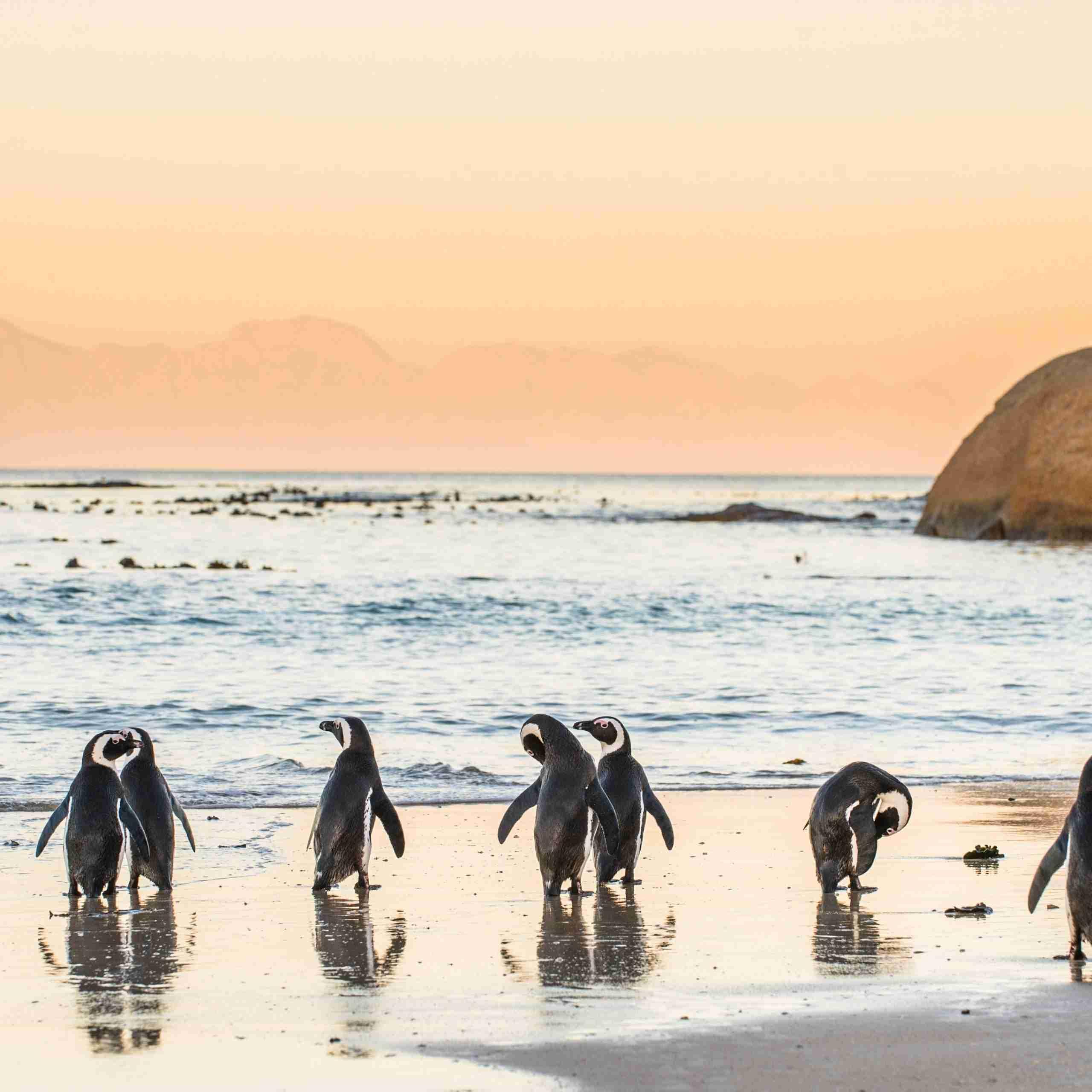 SA birdwatching evid