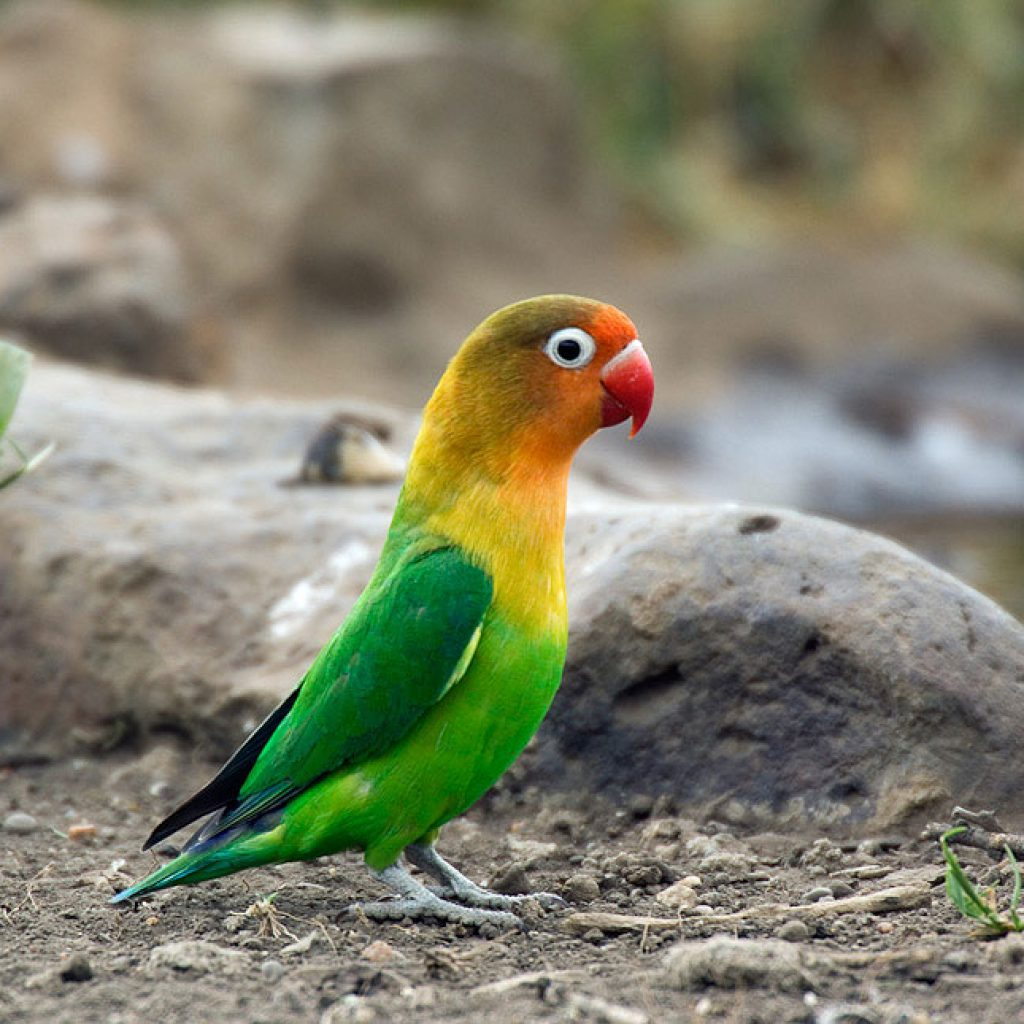 bird tanzania 01