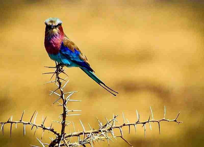 birdwatching 02 b