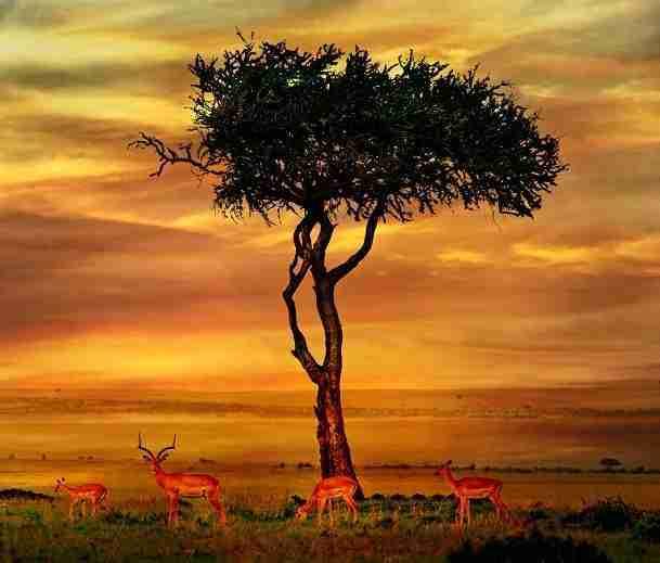 africa with children1