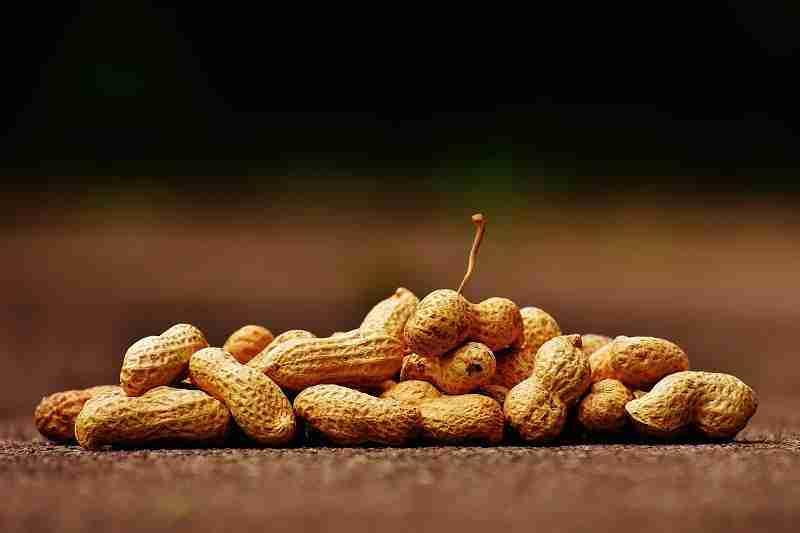 uganda food EVID