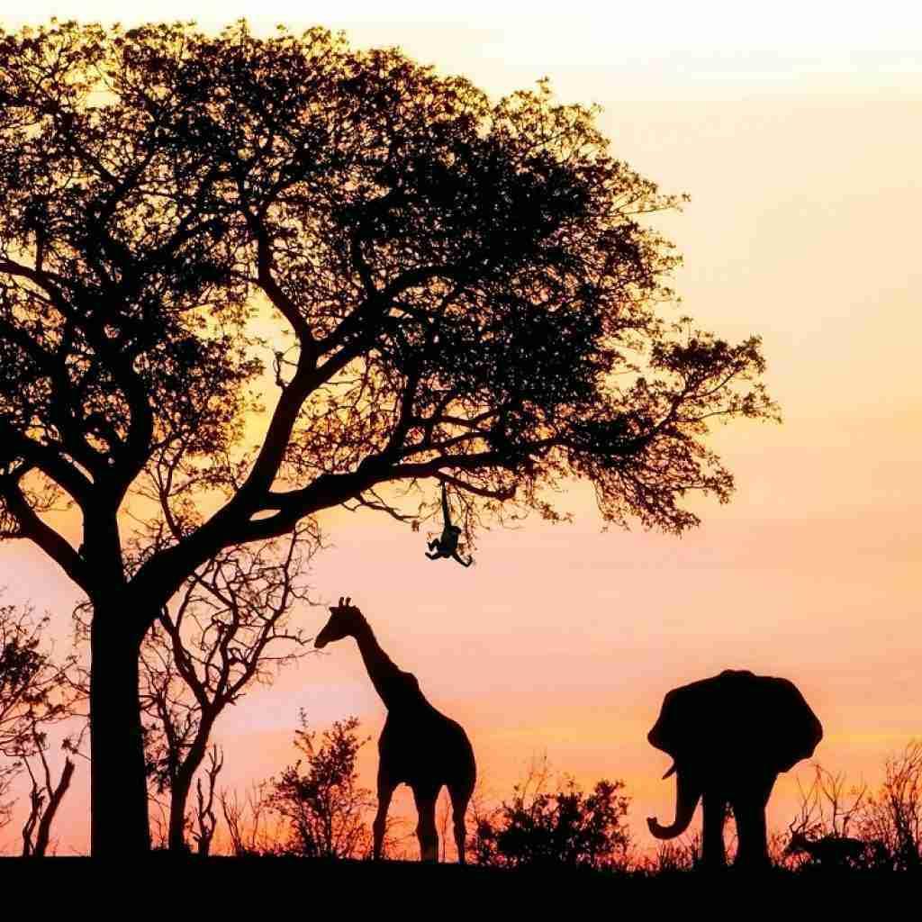 zambia honeymoon 01