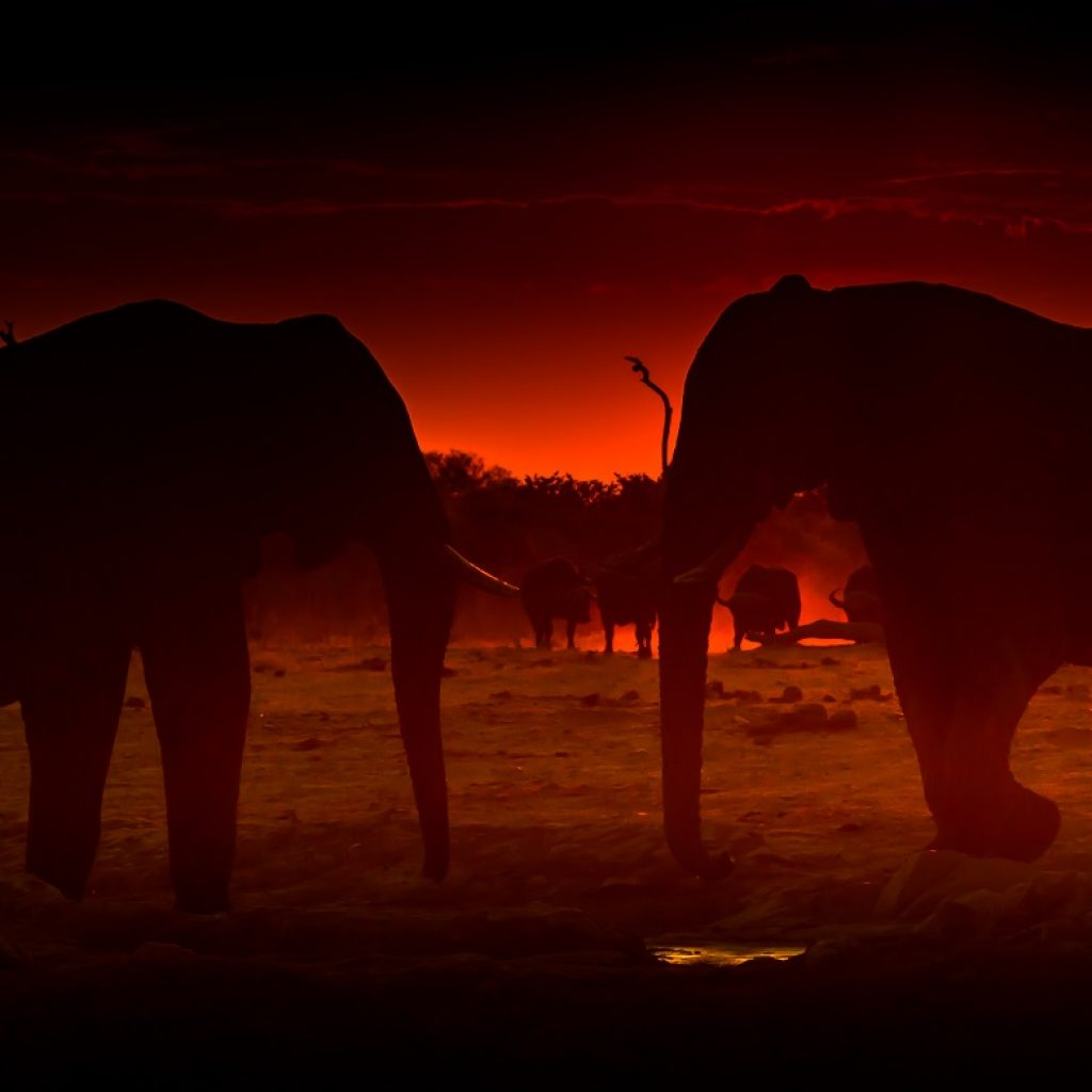 botswana safari 1