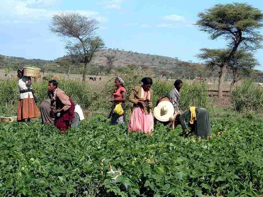 coffee plantations02